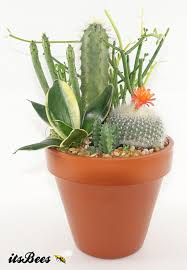 cactus garden succulent aftcra