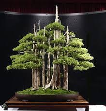 care guide for the juniper bonsai tree