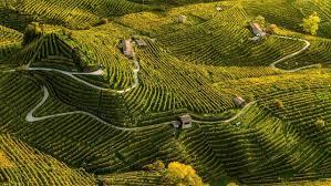 Giro 2020 - Stage 14: Conegliano – Valdobbiadene 34.1 km ITT *Spoilers* —  BikeRadar
