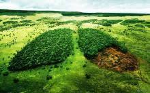 На відновлення навколишнього середовища підприємства Луганщини сплатили понад 8 млн грн екологічного податку