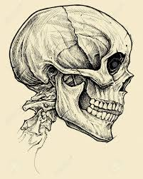 skull drawing line work vector for use
