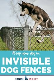 What Is The Best Dog Fence Want The Best Price To Keep Your Dog At Home Outside That S Where An Invisible Dog Fence Comes In W Dog Fence Top Dog Breeds