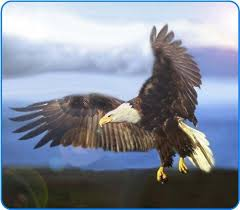 American Bald Eagle In Flight Etched Vinyl Stained Glass Film Static Cling Window Decal Great Buy Tuan100408