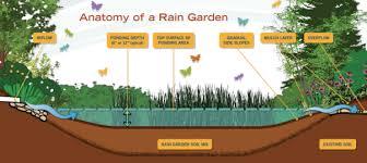 rain gardens washington state university