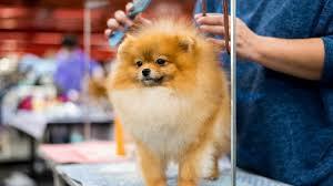 Dogs 101: Brushing Your Dog - Dogtime