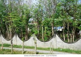 Plants Fence Neighborhood Dumaguete Philippines Parks Outdoor Stock Image 1127079245