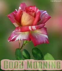 list of free good morning for whatsapp