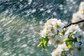 Spring rain in the garden stock photo. Image of outdoor - 115435790