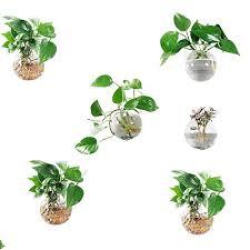 hanging air plants com
