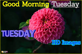 good morning tuesday hd images with