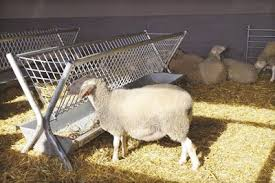 Two Side Sheep And Goat Feeder By Limk Ltd
