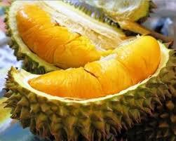 Cara Menanam Pokok Durian Musang King – Malaysia Online Plant Nursery