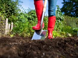using manure in your vegetable garden