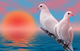birds wallpapers hdwallpapers backgrounds