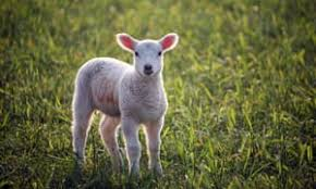 Image result for good shepherd