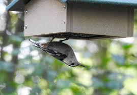 gifts for birdwatchers birders