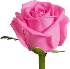 Best HD Wallpaper Rose Images - Best Rose Images