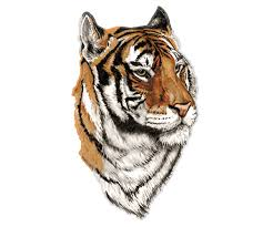 Tiger Decal Cat Bengal Siberian Car Truck Rv Vinyl Window Sticker Rh Rotten Remains High Quality Stickers Decals