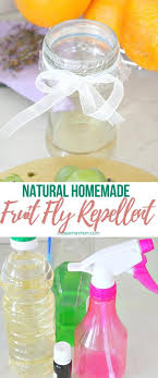 fruit fly repellent ideas that are