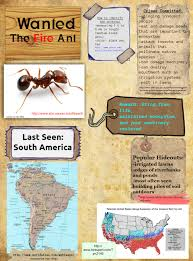 View Orkin Fire Ants Pictures