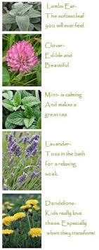 planting a sensory garden gardening
