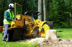Cleveland Heights Tree Removal Company | Tree Service Company ...