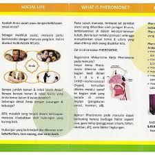 identic pheromone ml pheromone aromathyeraphy yang dikemas