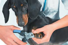 how to trim dog nails safely