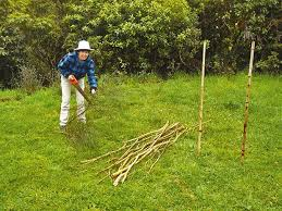 How To Weave A Wattle Fence Thisnzlife