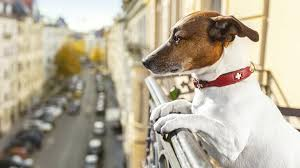 pet friendly us vacation spots ranked