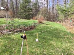 why use deer electric fence electric