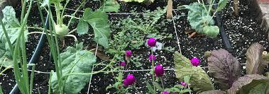 south florida gardening organic