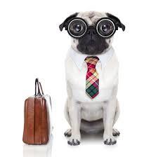 Il programma della Giornata mondiale del Cane in ufficio - Generali Baluardi