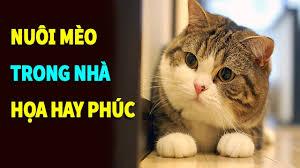 Sự thật nuôi mèo trong nhà là HỌA hay PHÚC - YouTube