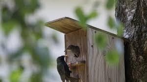fabriquer un nichoir en bois pour les