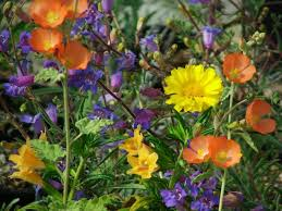 native plants las pilitas nurseries