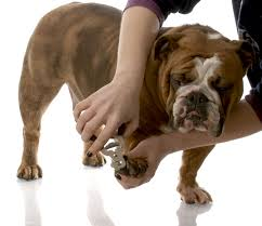 how to safely trim your pets nails at