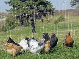 Electric Poultry Netting Live Wire Products Llc