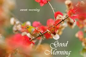 good morning birds images photos pics