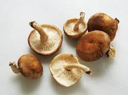 Panfried Dumplings Stuffed with Chicken and Mushroom | Cookstr.com