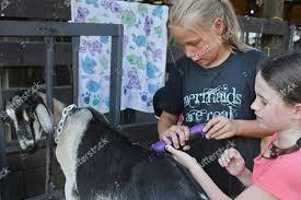 Evangeline Westermann 12 left Ava Bennett shave Editorial Stock Photo -  Stock Image   Shutterstock