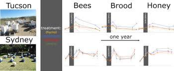 dynamics of honey bee colonies