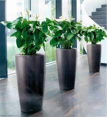 elegant indoor planters klaric home