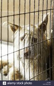 Caged and abandoned dogs, detail of street animals, animal abuse ...