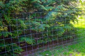 My Cattle Panel Trellis Kevin Lee Jacobs