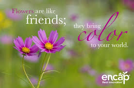 flowers are like friends they bring color to your world