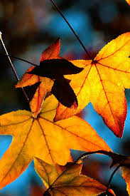 autumn leaves wallpaper iphone