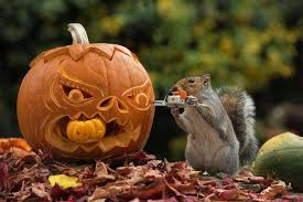 Happy Halloween! Hope you found all... - WRI Outdoors & Tractors | Facebook
