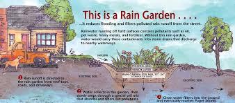 rain gardens direct rainwater while