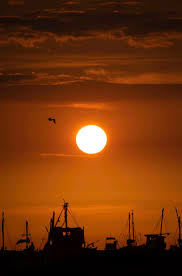 sunlight nature bird